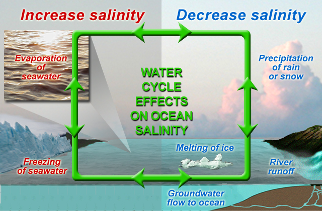 Water cycle effects on ocean salinity